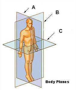 body-planes