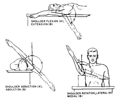 Shoulder extension and Flexion